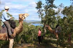 Calamunda Camels