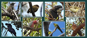 Birds in our Birds Backyard
