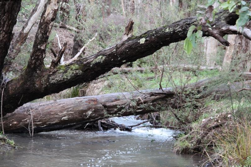 Piesse Brook 3