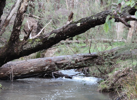 Top 3 Little-Known Winter Walks in the Perth Hills