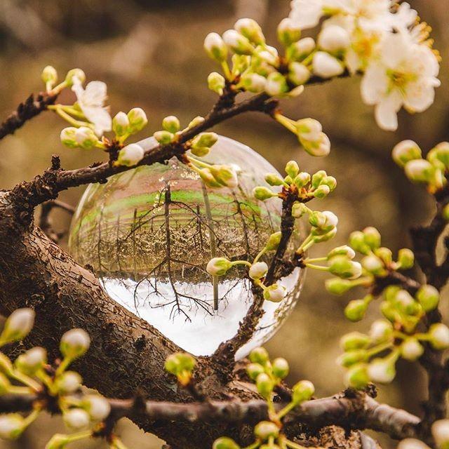 Brilliant capture of the emerging blosso