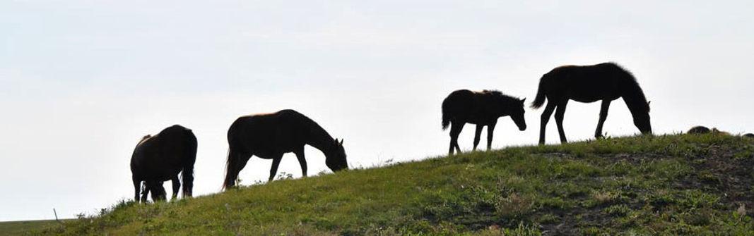内モンゴル観光 ハイラル 草原