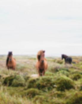 内モンゴル観光 馬 大草原