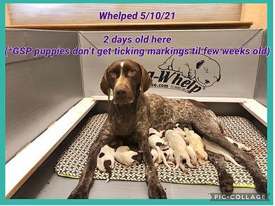 Puppies - 2 days old.JPG