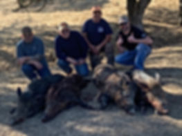 wild pig hunting california