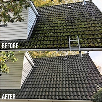 Moss Roof - Before & After.jpg
