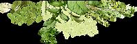 ווקטור דקורטיבי של עלים
