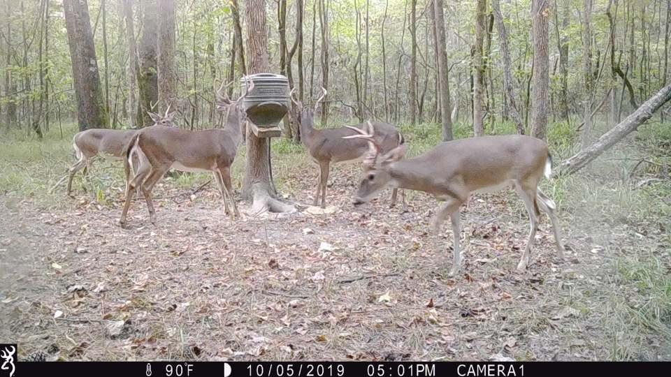 Deercam2.jpg
