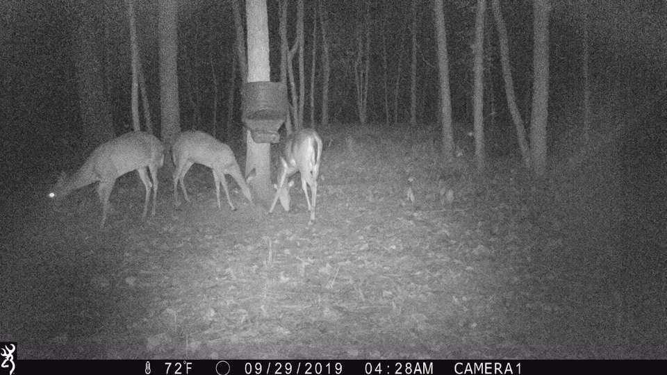Deercam3.jpg