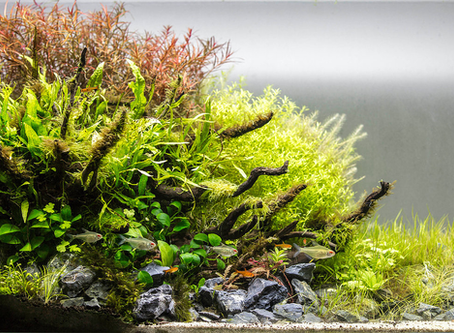 Liverpool Creek Aquascaping winner is... Willie Thow