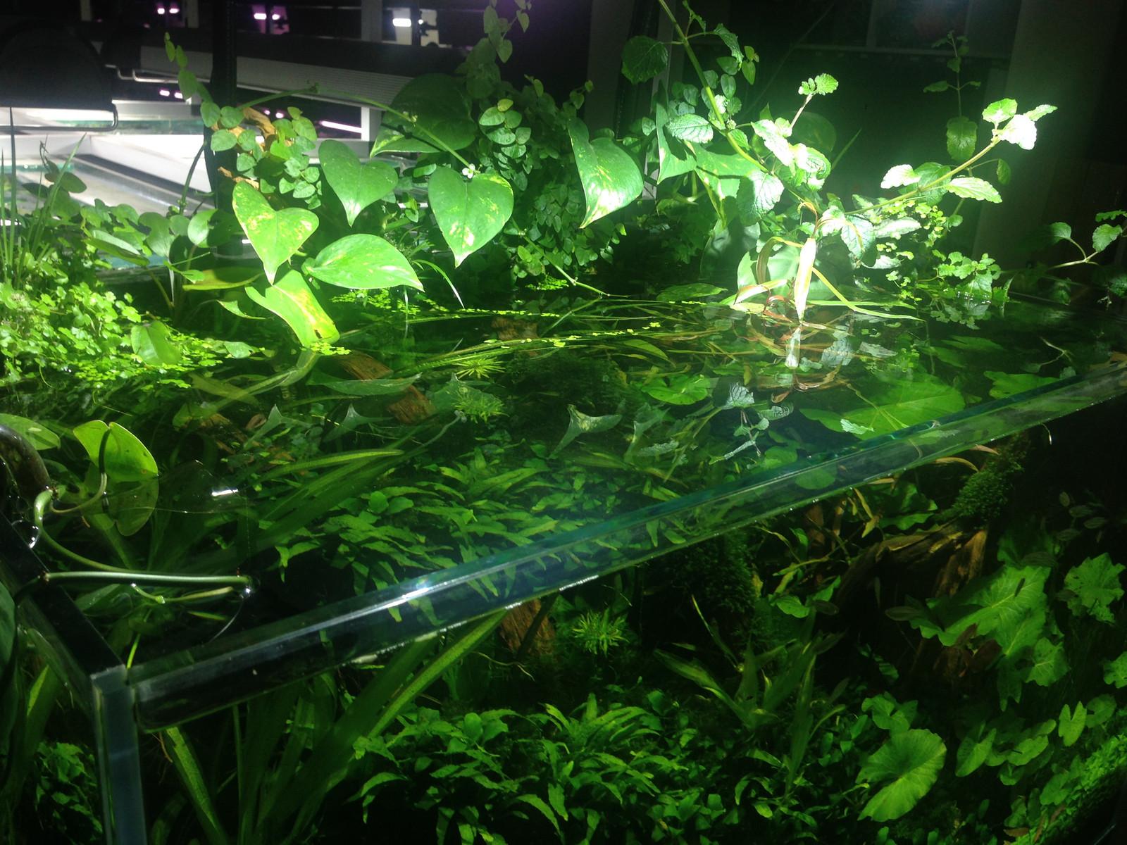 By subscape aquarium cade australia for Spacearium aquariums