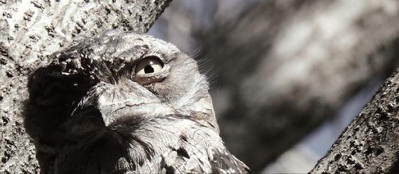 INFINITY_Toppic_weirdbird.jpg