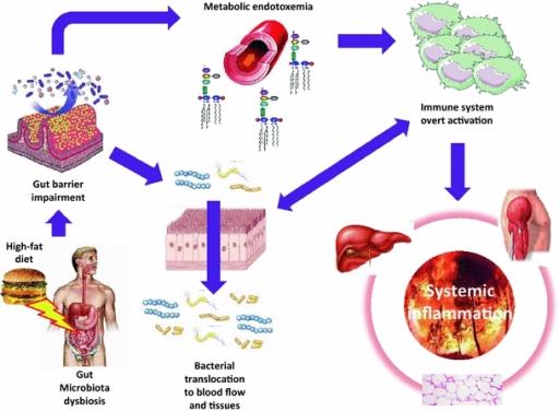 Dysbiosis burping, Helminth infestation symptoms