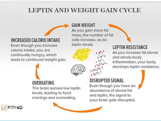 Blue light weight gain