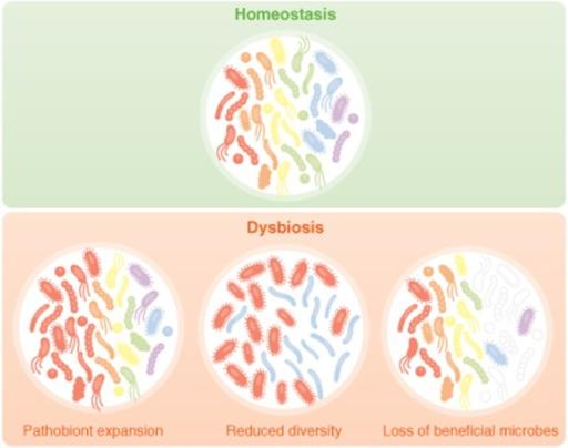 dysbiosis or sibo