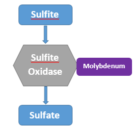creation of sulphate