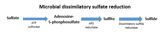 sulphate diagram