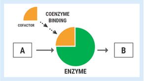 "Mega-Dose Thiamine: Beyond Addressing ""Deficiency"""