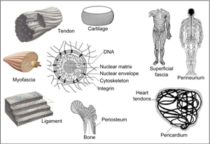 collagen in the body