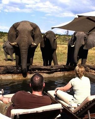 hwange-safari-lodge-elephant-by-pool-590