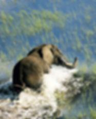zambia-21395951-1496149080-ImageGalleryL