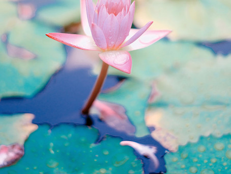 Embodied (Somatic) Practices Invite Our Inner Knowing