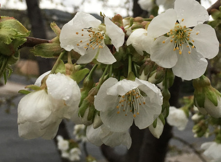 Chinese Medicine Life Practices to Put Spring in Your Step!