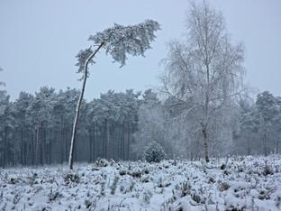 Kanton Solothurn: Bäume brechen unter Schneelast - Aufenthalt im Wald meiden