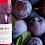 Thumbnail: フルーツワイン「ヴォルタ・プラム」