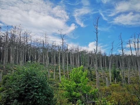 魔女の丘を囲む森(ネリンガ)