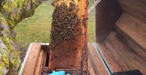 100年以上受け継がれている養蜂家の巣箱
