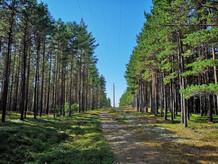 田舎の風景 - 森の道
