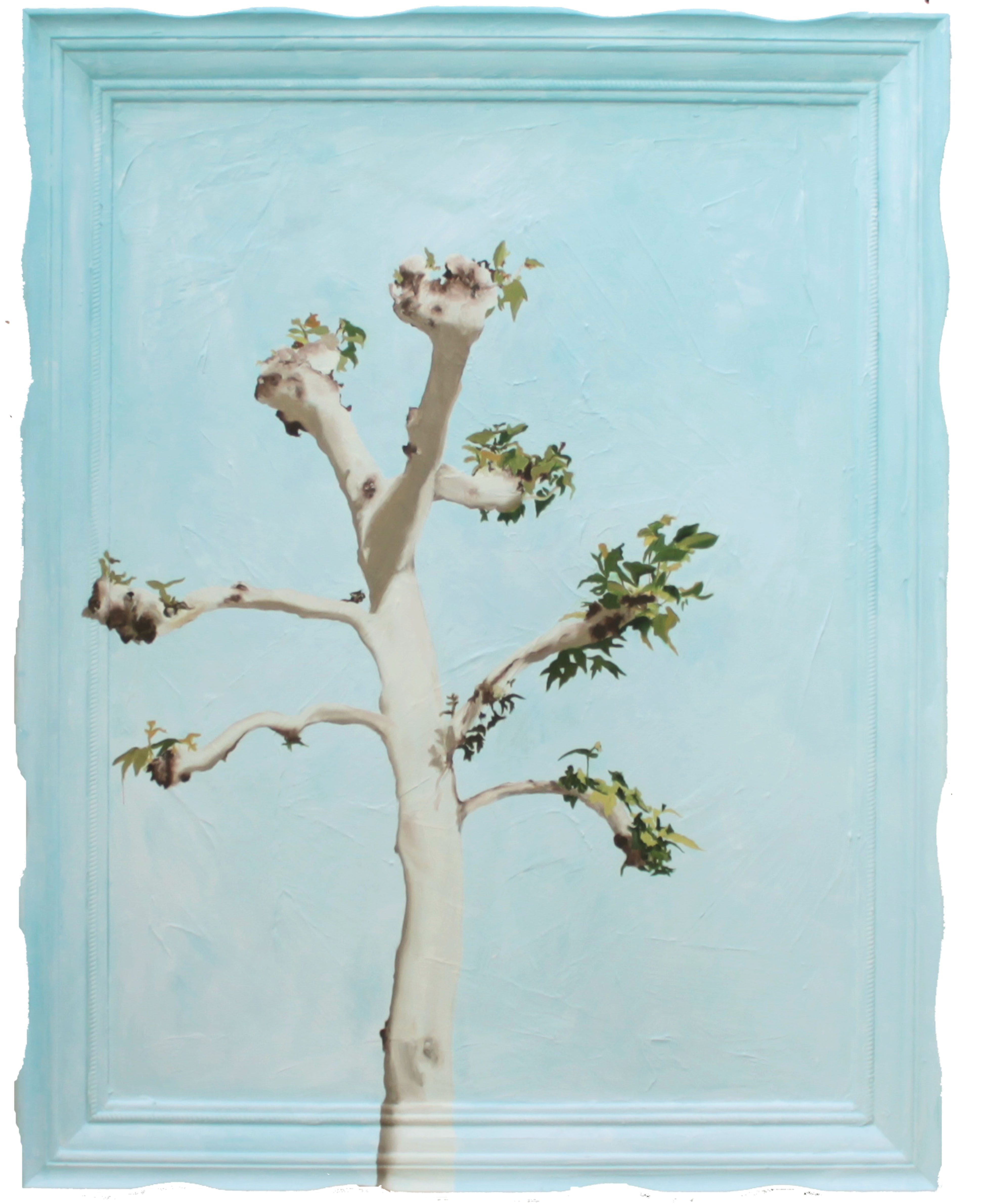 Plain Tree