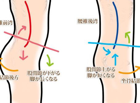 ATP(Anterior Pelvic Tile)※前部骨盤傾斜について バイオメカニクス