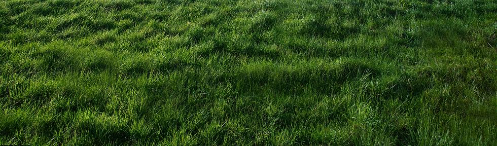 GreenBiofuels-grass.png