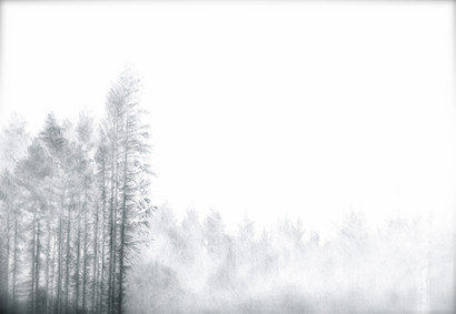 Forest Edge, Bellever Tor