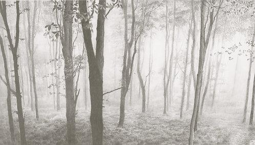 PAUL NEWMAN / Sea Mist