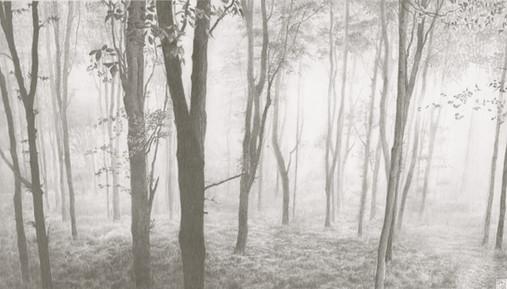 Sea Mist, Langdon Hill