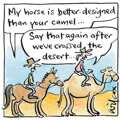 camel & horse cartoon.jpg