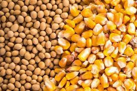 Corn, Soybean Prices Tumble 30 Cents on Forecast for Cooler, Wetter Weather End of Week