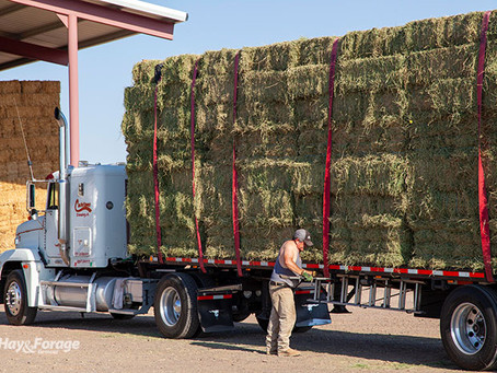 What factors will shape 2021 hay prices?