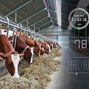 Detect nutrition changes before you can see cow effects