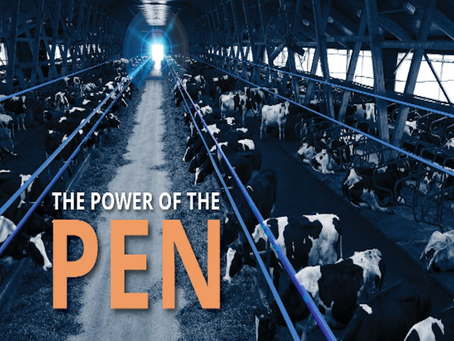 Focus on the Pen, Not Individual Cows, to Deliver Profits