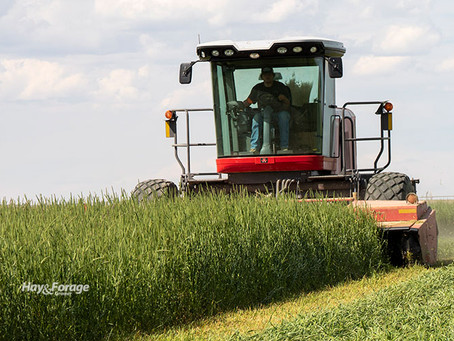 Cut early to reduce winter feed costs