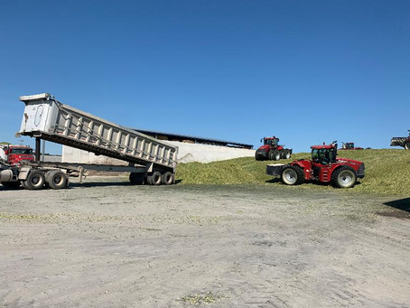 Have Feed Inventory Discussions Before Going into Corn Silage Season