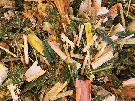 Corn silage is a mixed bag of groceries