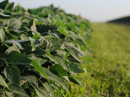 USDA Report Shows Record Soybean Quarterly Stock Drop