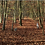 Thumbnail: O'Loty t'invite dans la forêt magique Boreea - magical forest