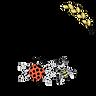 Graines de résilience - accompagnement, facilitatation, formation - Bordeaux - Pauline Dreux-Palassy