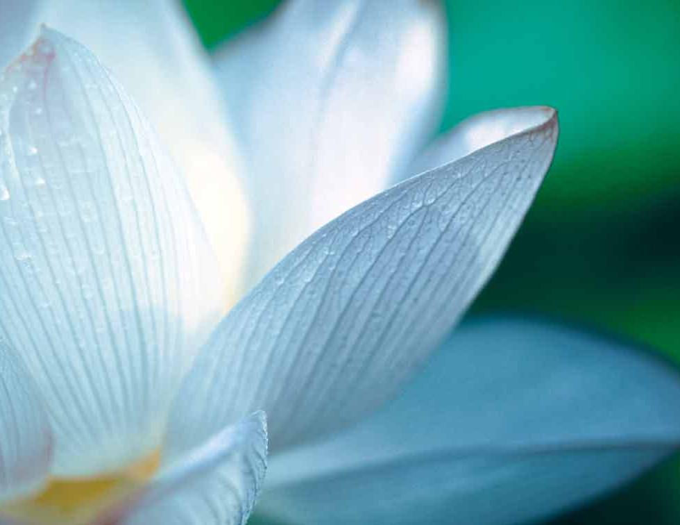 Lotus_756pxhigh.jpg